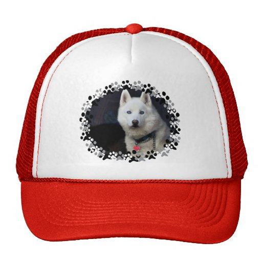 Siberian Husky Photo Hats