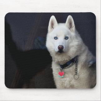 Siberian Husky Photo Mouse Pad