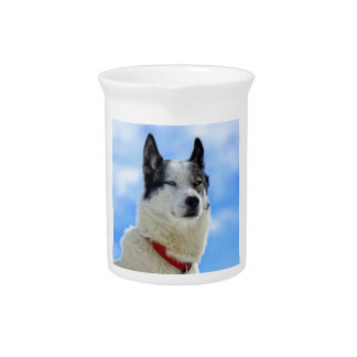 Siberian husky portrait beverage pitcher