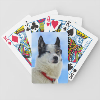 Siberian husky portrait bicycle playing cards