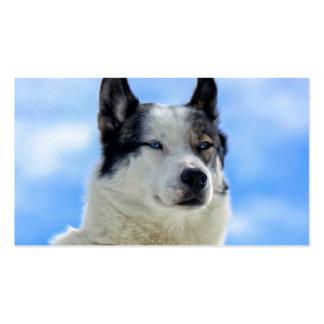 Siberian husky portrait business card