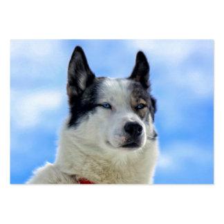 Siberian husky portrait large business card