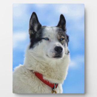 Siberian husky portrait plaque
