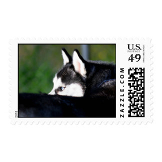 Siberian Husky postage
