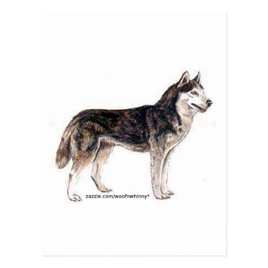 Siberian Husky! Postcard