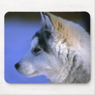 Siberian Husky pup Mouse Pads