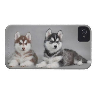 Siberian husky puppies iPhone 4 cover