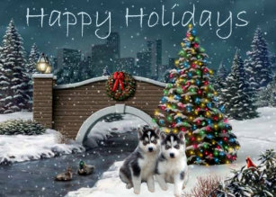 siberian husky puppies christmas evening card