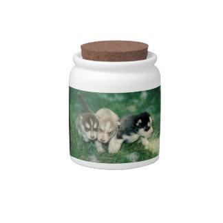 Siberian Husky Puppies Dog Treat Candy Jar