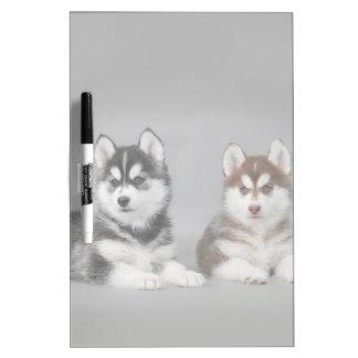 Siberian husky puppies Dry-Erase whiteboard