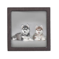 Siberian husky puppies keepsake box