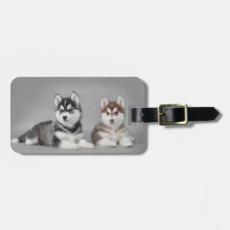 Siberian husky puppies bag tag