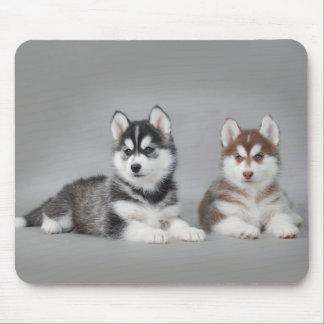 Siberian husky puppies mouse pad