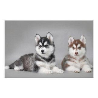Siberian husky puppies stationery