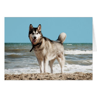Siberian Husky Puppy Dog Blank Note Card