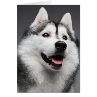 Siberian Husky Puppy Dog -  Hello, Love, Miss You, Card