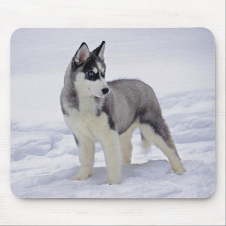 Siberian Husky Puppy Dog in Snow Mouse Pad