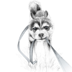 Husky Drawings Accessories Zazzle