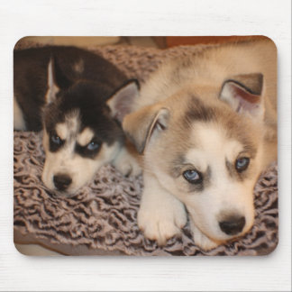 Siberian Husky Puppy Mouse Pads