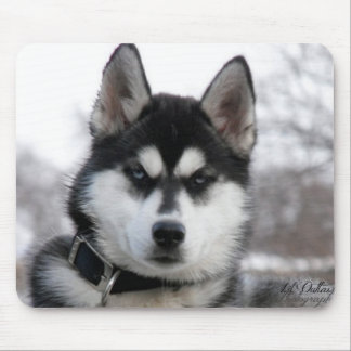 Siberian Husky Puppy mouse pad