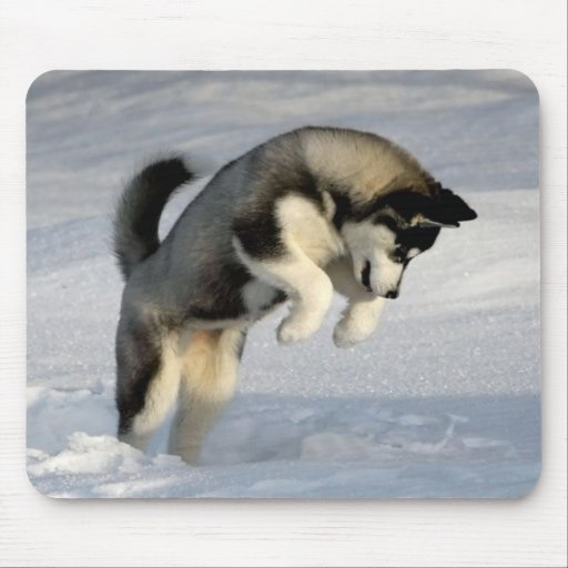 Siberian Husky puppy playing in the snow. Mousepad