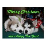 Siberian Husky Puppy Post Card