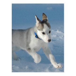 Siberian Husky Puppy Postcards