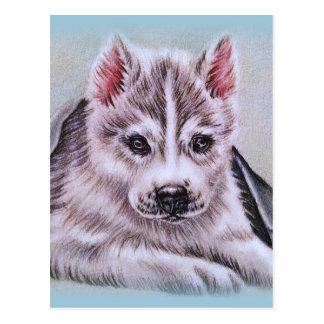 Siberian Husky Puppy with Blanket Drawing Postcard