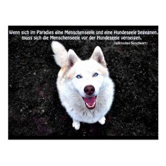 Siberian Husky saying Postcard