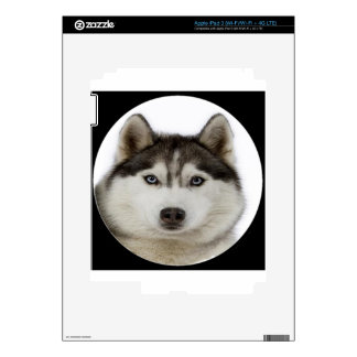 """Siberian Husky"" Skin For iPad 3"