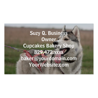 Siberian Husky sled dog Double-Sided Standard Business Cards (Pack Of 100)