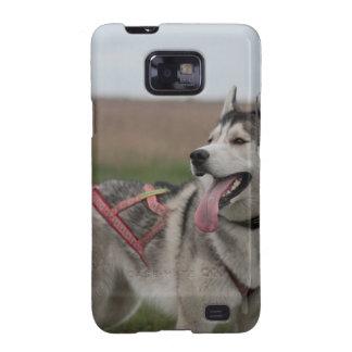 Siberian Husky sled dog Galaxy S2 Cover