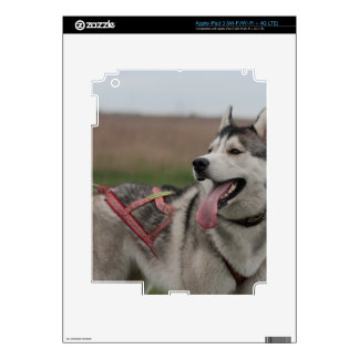 Siberian Husky sled dog Decal For iPad 3