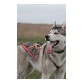 "Siberian Husky sled dog 5.5"" X 8.5"" Flyer"