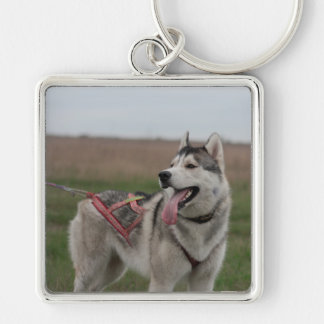 Siberian Husky sled dog Silver-Colored Square Keychain