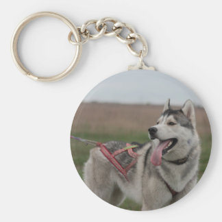 Siberian Husky sled dog Basic Round Button Keychain