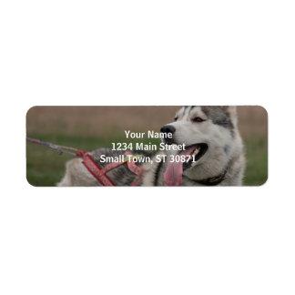 Siberian Husky sled dog Return Address Label