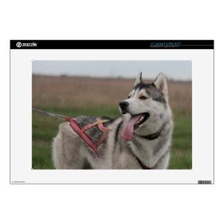 "Siberian Husky sled dog 15"" Laptop Decal"