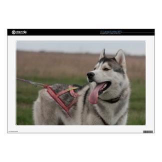 Siberian Husky sled dog Decals For Laptops
