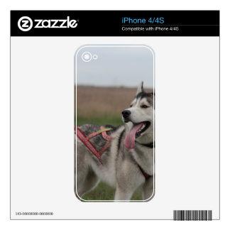 Siberian Husky sled dog Skins For iPhone 4S
