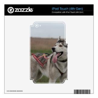 Siberian Husky sled dog Skins For iPod Touch 4G