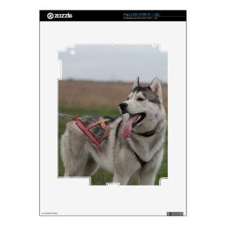 Siberian Husky sled dog Skins For The iPad 2
