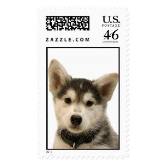 Siberian Husky Stamp (LARGE)