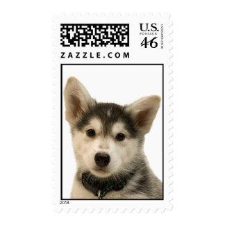 Siberian Husky Stamp (MEDIUM)