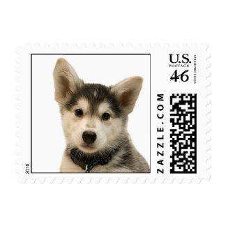Siberian Husky Stamp (SMALL)