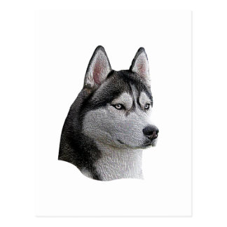 Siberian Husky - Stylized Image - Add Your Text Postcard