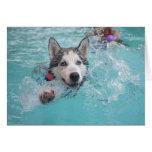 Siberian Husky Swimming in Pool Cards