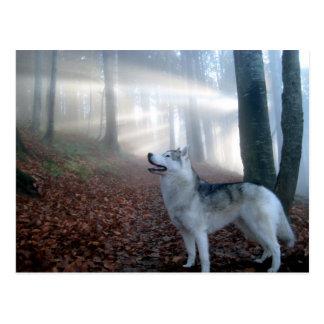 Siberian Husky - tarjeta postal