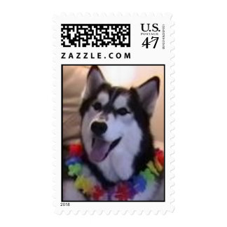 Siberian Husky wearing lei Postage Stamp