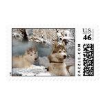 Siberian Husky Winter Wonderland Postage Stamps